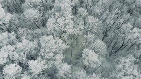 Лес с покрытыми снег деревьями, замедленное движение зимы, воздушная съемка акции видеоматериалы