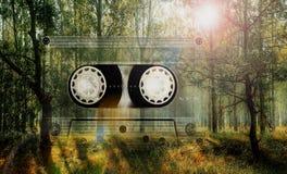 Лес с солнцем Стоковое фото RF