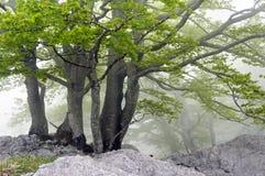 Лес с утесами стоковое изображение rf
