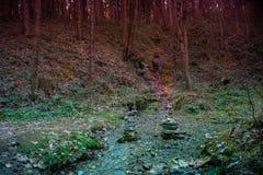 Лес тайны в вечере стоковая фотография rf