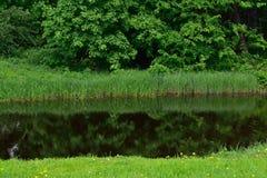 Лес, трава и река Стоковое Изображение