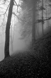 Лес тумана тайны Стоковые Фотографии RF