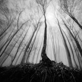 Лес тумана Стоковое Изображение