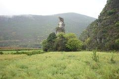 Лес 10 тысяч пиков Стоковые Фото