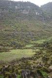 Лес 10 тысяч пиков Стоковая Фотография