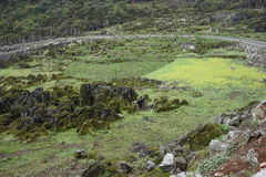 Лес 10 тысяч пиков Стоковое Фото
