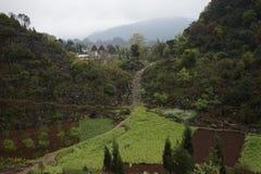 Лес 10 тысяч пиков Стоковое Изображение RF