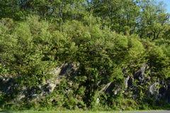 Лес утеса гор голубого Риджа в лете Стоковые Фотографии RF