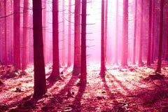 Лес фантазии Стоковые Фотографии RF