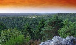 Лес Фонтенбло стоковые изображения rf