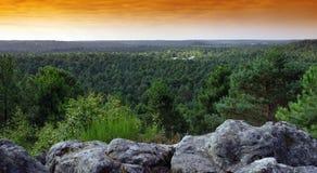 Лес Фонтенбло стоковое изображение rf