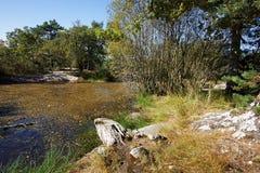 Лес Фонтенбло стоковое фото rf