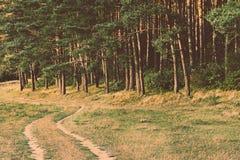 Лес хвои Стоковое Изображение