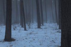 Лес хмурой зимы холодный, туман Стоковое Изображение RF