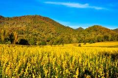 Лес цвета изменения Стоковая Фотография RF