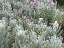 Лес цветка! Стоковое Фото