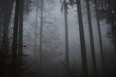 Лес через туман в Германии стоковые изображения rf