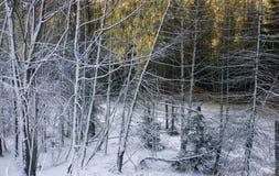 Лес Шамони Стоковое Фото