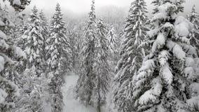 Лес Шамони Стоковое фото RF