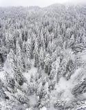 Лес Шамони Стоковые Фото