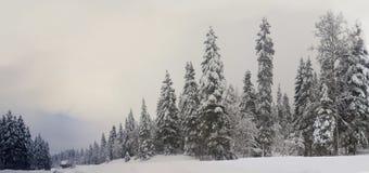 Лес Шамони Стоковое Изображение