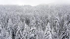Лес Шамони Стоковое Изображение RF