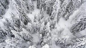 Лес Шамони Стоковая Фотография RF