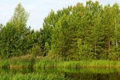 Лес любит Стоковое Изображение