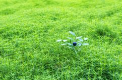 Лес ягод Подарки природы Стоковое Изображение