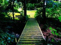 Лес Стоковая Фотография