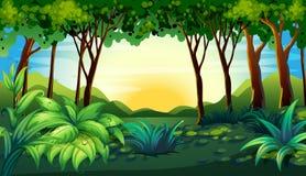 Лес иллюстрация штока