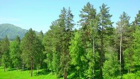 Лес сток-видео