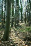 Лес 02 Стоковые Изображения