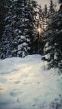 Лес стоковое изображение