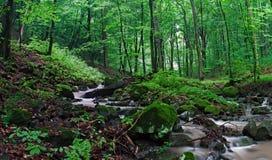 Лес стоковое изображение rf