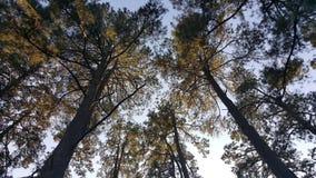 Лес Стоковые Фото