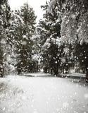 Лес Стоковое Фото