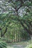Лес Стоковая Фотография RF