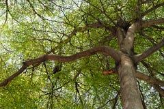Лес 001 Стоковая Фотография RF