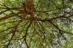 Лес 003 Стоковые Изображения