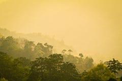 Лес Стоковое фото RF