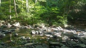 Лес 6 Стоковое Изображение RF