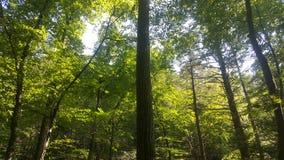 Лес 4 Стоковые Изображения RF