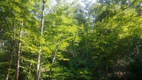 Лес 7 Стоковое Фото