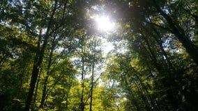 Лес 7 Стоковое Изображение RF