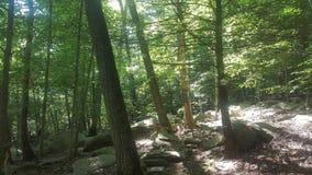 Лес 9 Стоковая Фотография