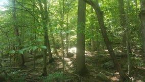 Лес 16 Стоковые Изображения RF