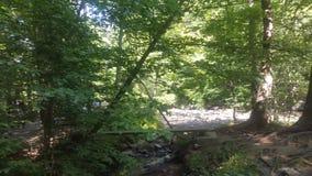 Лес 13 Стоковое Изображение