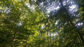 Лес 27 Стоковые Фото