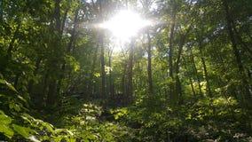 Лес 33 Стоковые Фото